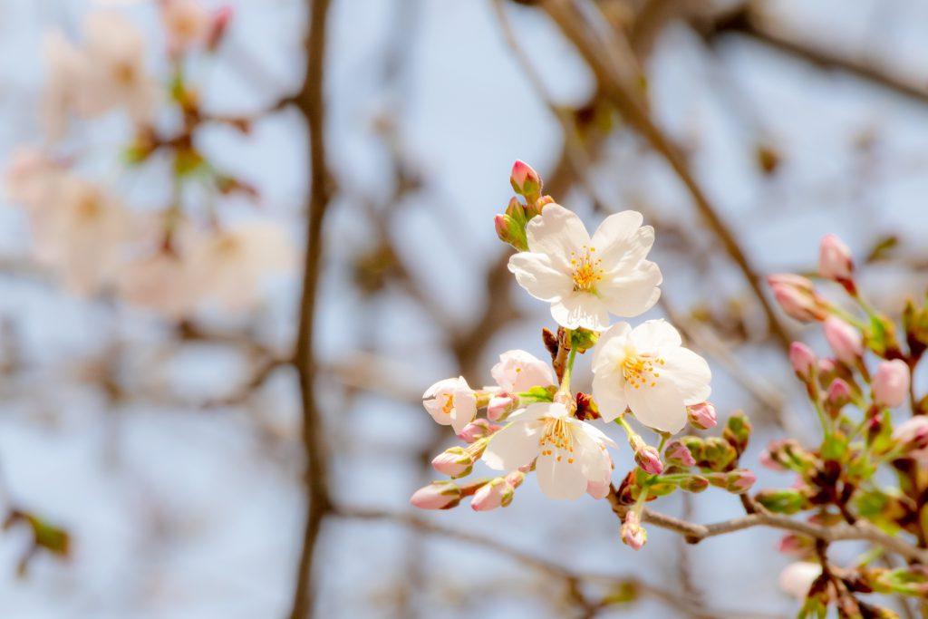 冬は必ず春となる」~苦難は必ず乗り越えられる~|創価学会公式